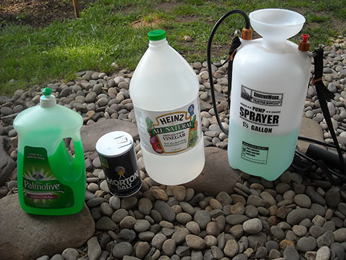 pick right pet-friendly weed killer