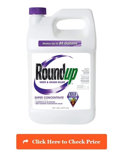 Roundup Grass & Weed Killer Super Concentrate