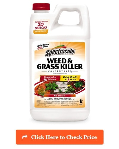 Spectracide Grass & Weed Killer Concentrate2
