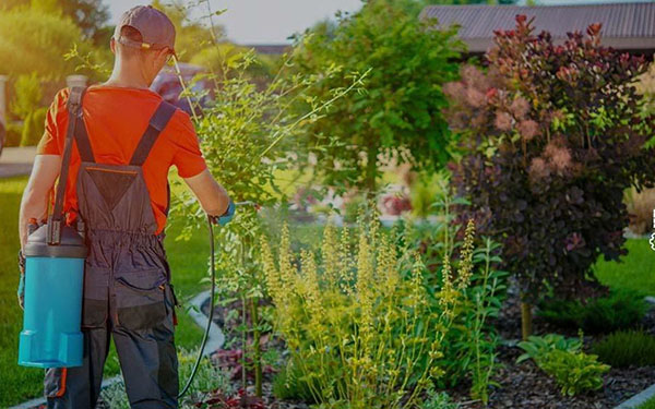 Choice Best Weed Killer Flower Beds