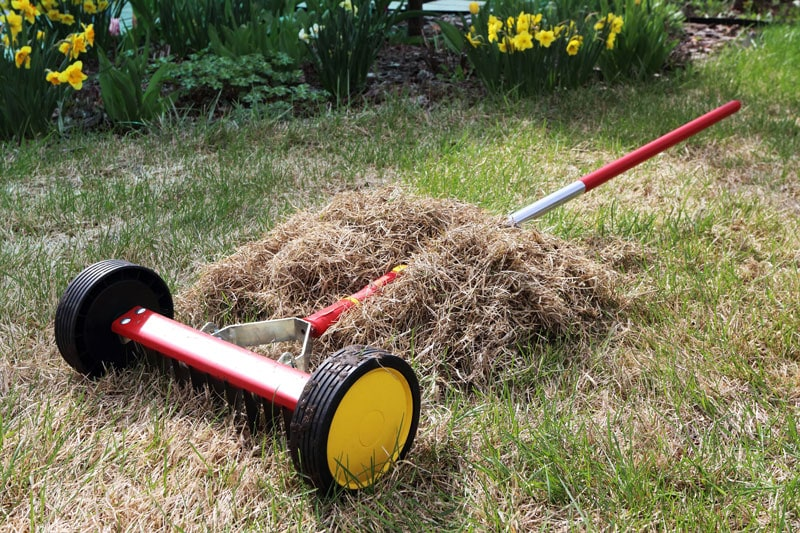 Dethatching vs Aerating