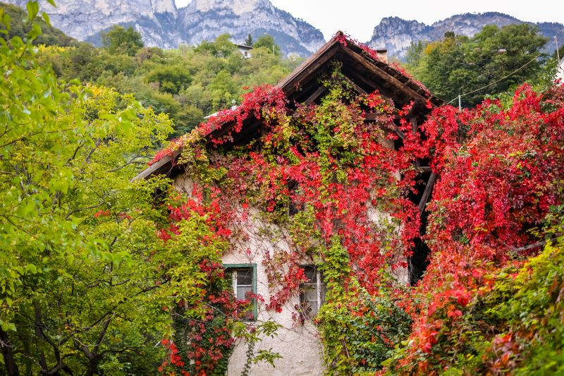 How to Get Rid of Virginia Creeper