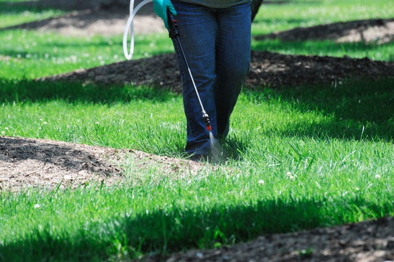Lawn Starter Fertilizer vs Regular Fertilizer