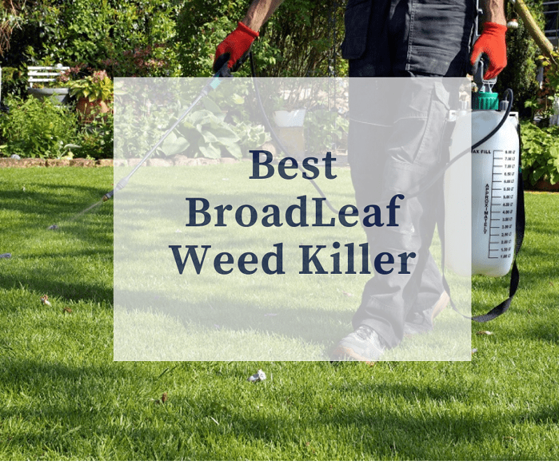 Best BroadLeaf Weed Killer
