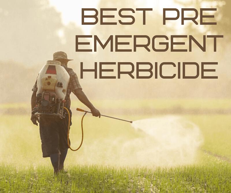 Best Pre Emergent Herbicide