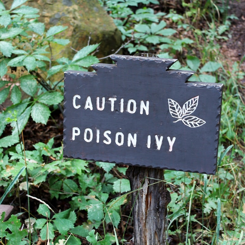 best poison ivy killer